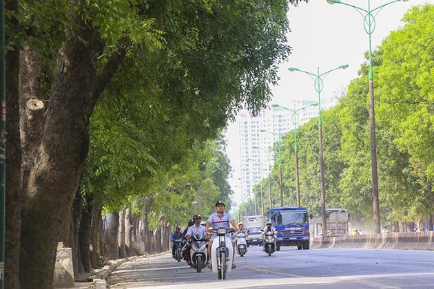 Chủ tịch Nguyễn Đức Chung: HN rất cân nhắc chặt hạ cây xanh - 1