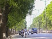 Tin tức trong ngày - Chủ tịch Nguyễn Đức Chung: HN rất cân nhắc chặt hạ cây xanh