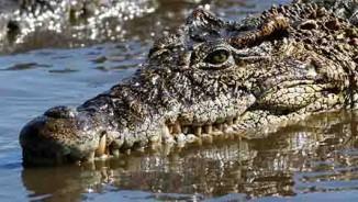 7 loài động vật giết người nhiều nhất hành tinh