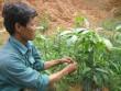 Kiếm tiền tỷ nhờ ươm cây giống từ hạt…vứt thùng rác