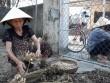 Hà Tĩnh: Lạc mất giá từ 25.000 đ còn 15.000 đ/kg, lại chờ giải cứu
