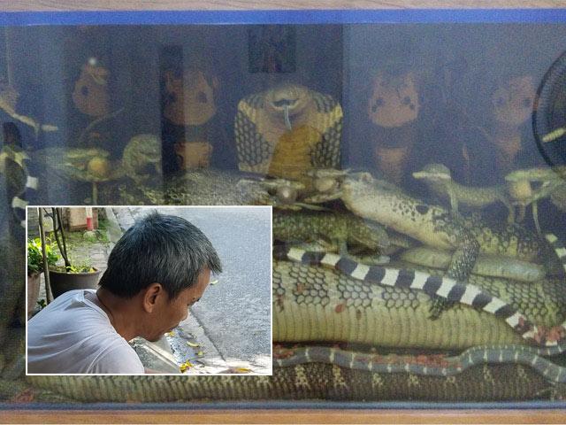 """""""Vua rắn độc"""" kinh ngạc trước mãng xà 45kg ở Hà Nội"""
