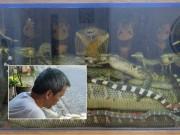 """Tin tức trong ngày - """"Vua rắn độc"""" kinh ngạc trước mãng xà 45kg ở Hà Nội"""