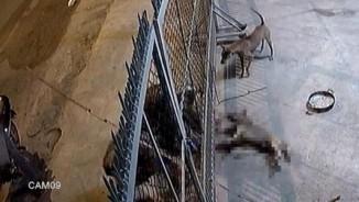 Cảnh chủ nhà đầu hàng trộm chó ở VN lên báo nước ngoài