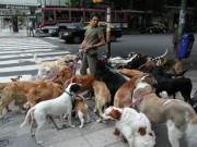 Tài chính - Bất động sản - Bỏ túi hàng trăm USD nhờ... dắt chó đi dạo