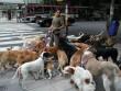 Bỏ túi hàng trăm USD nhờ... dắt chó đi dạo