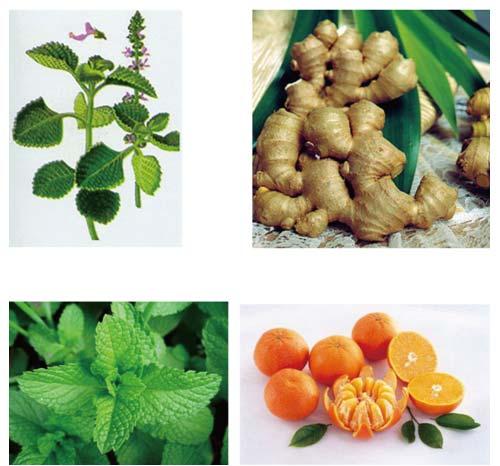 Eugintol Fresh - Giải pháp hữu hiệu cho mọi cơn ho - 1