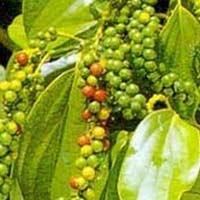 Đắk Lắk: Càphê, hồ tiêu, ca cao đồng loạt tăng giá