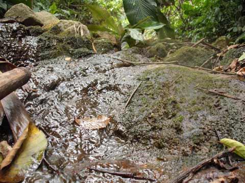 Con gái trắng hồng nhờ tắm ở suối thần Việt Nam - 3