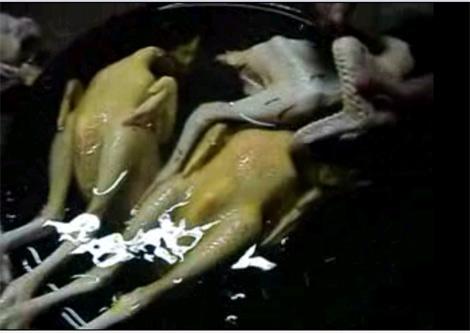Vécni làm bóng gỗ làm gà vàng ruộm - 2