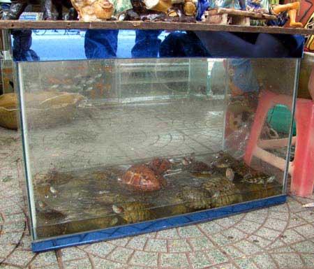 Rùa tai đỏ vẫn được bày bán công khai - 1