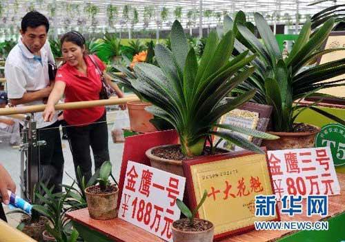 Cây hoa lan có giá hơn 200 tỷ - 2