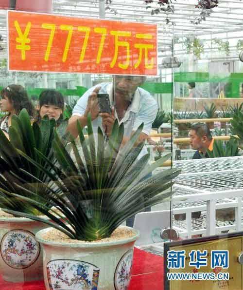 Cây hoa lan có giá hơn 200 tỷ - 3