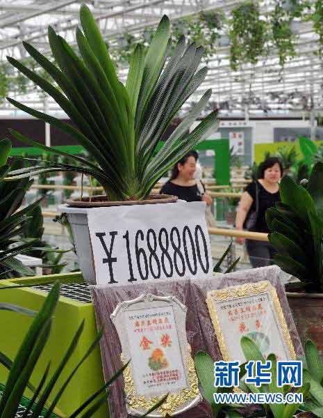 Cây hoa lan có giá hơn 200 tỷ - 1