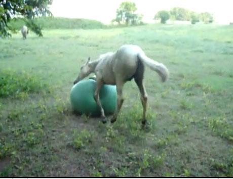 Video: Ngựa chơi bóng - 2