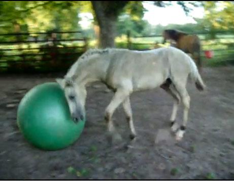 Video: Ngựa chơi bóng - 3