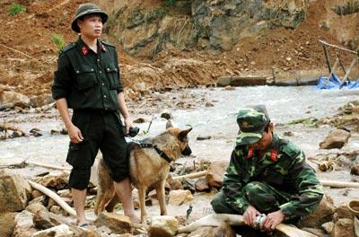 Yên Bái: Chó nghiệp vụ tìm người mất tích - 2