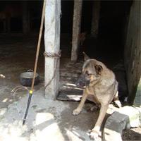 Video: Bỏ mạng vì câu trộm chó