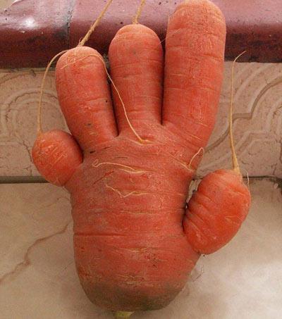 Củ cà rốt giống nhân vật Toy Story - 2