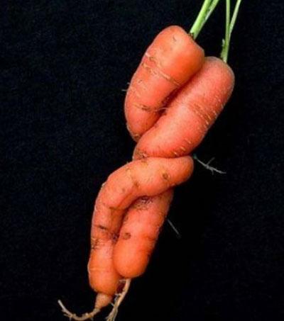 Củ cà rốt giống nhân vật Toy Story - 3