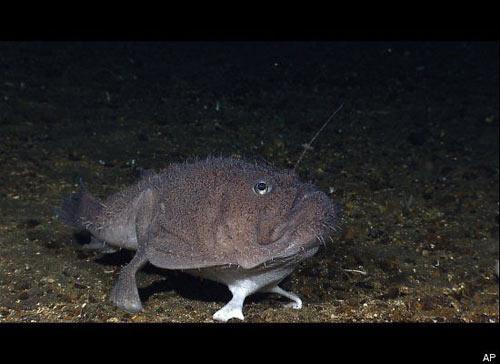 Những sinh vật lạ dưới đáy biển Indonesia - 6