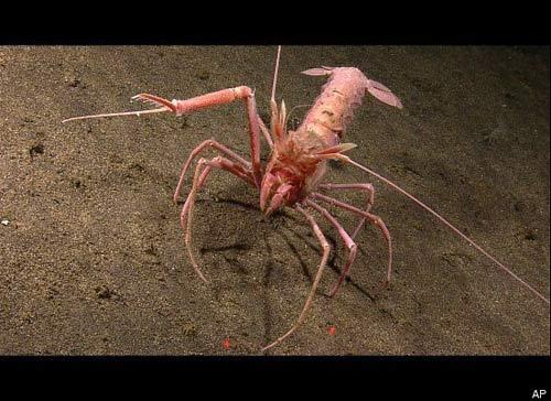 Những sinh vật lạ dưới đáy biển Indonesia - 7
