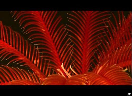 Những sinh vật lạ dưới đáy biển Indonesia - 8