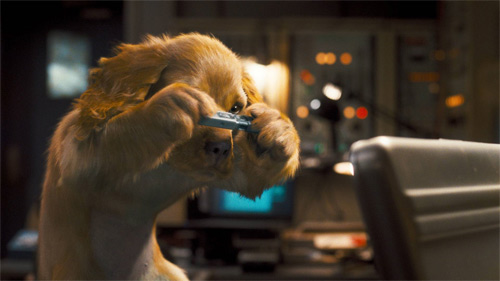 Phim mới: Đại chiến chó mèo - 4