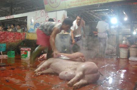 Cận cảnh lò giết mổ lợn giữa Thủ đô - 1