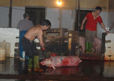Cận cảnh lò giết mổ lợn giữa Thủ đô - 9