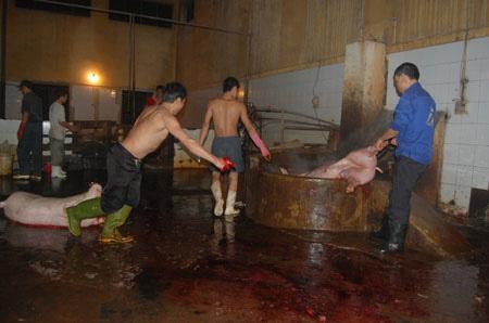 Cận cảnh lò giết mổ lợn giữa Thủ đô - 10