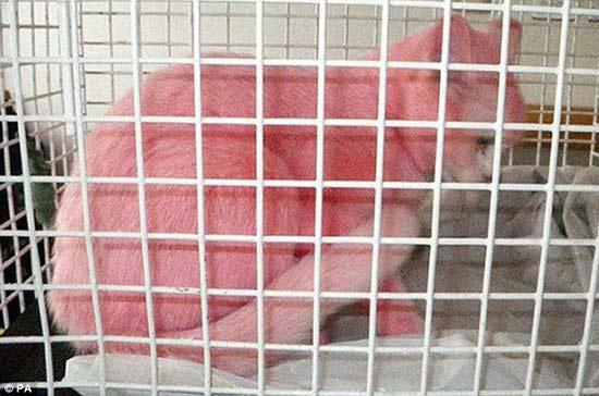 Chú mèo… màu hồng - 2