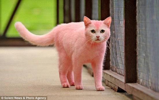 Chú mèo… màu hồng - 3
