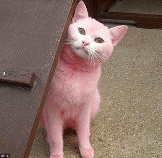 Chú mèo… màu hồng - 1