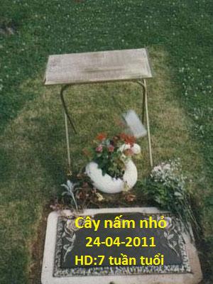"""Nghĩa địa ảo """"chôn"""" toàn thiếu nhi - 1"""