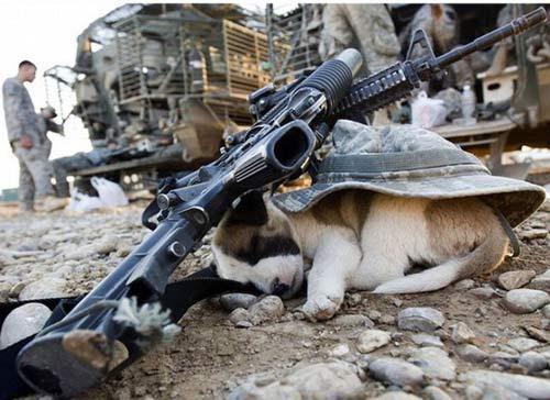 Hài hước động vật... đi lính - 2