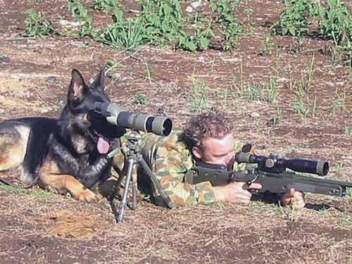 Hài hước động vật... đi lính - 5