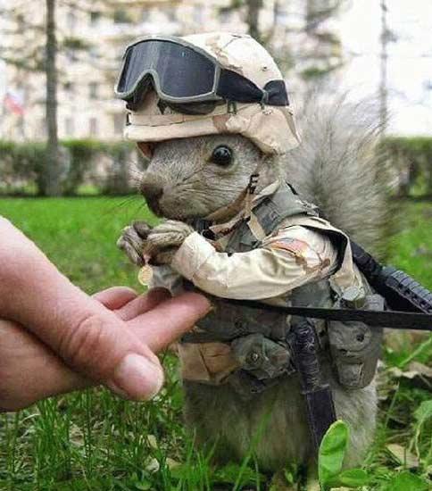 Hài hước động vật... đi lính - 6