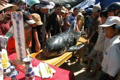 Kỳ bí nghĩa địa cá voi ở Quảng Nam - 1