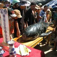 Kỳ bí nghĩa địa cá voi ở Quảng Nam