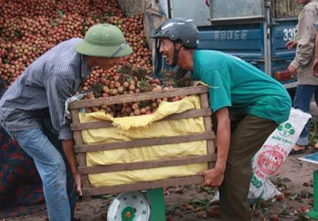 Thương lái Trung Quốc không được tự thu mua nông sản - 1