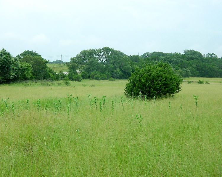 Thậm chí chỉ cánh đồng cỏ cũng đủ vẽ nên bức tranh vô cùng lãng mạn cho trang trại.