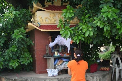 Lý giải cây lộc vừng thiêng ở Vĩnh Phúc - 4