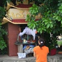 Lý giải cây lộc vừng thiêng ở Vĩnh Phúc