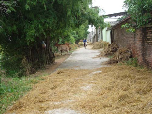 """Đến làng """"nói tức"""" ở Bắc Ninh - 1"""
