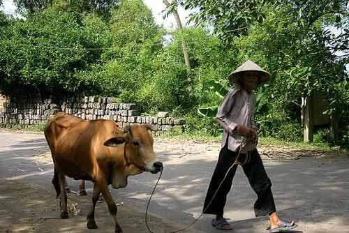 """Đến làng """"nói tức"""" ở Bắc Ninh - 3"""