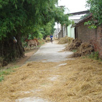 """Đến làng """"nói tức"""" ở Bắc Ninh"""