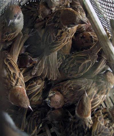 Toàn Quốc - Keo bẫy chim siêu bền- siêu dính (150.000vnđ=cục) tổng ...