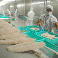 Giá cá tra xuất khẩu sụt giảm
