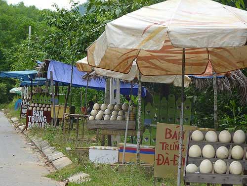 Chợ trứng đà điểu đợi khách du lịch - 1